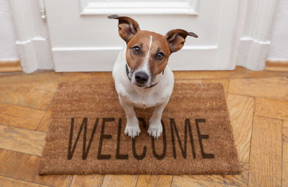 welcome_pup_1000x650